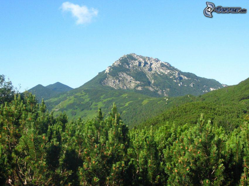szczyt, wzgóże ze skały, kosodrzewina, las