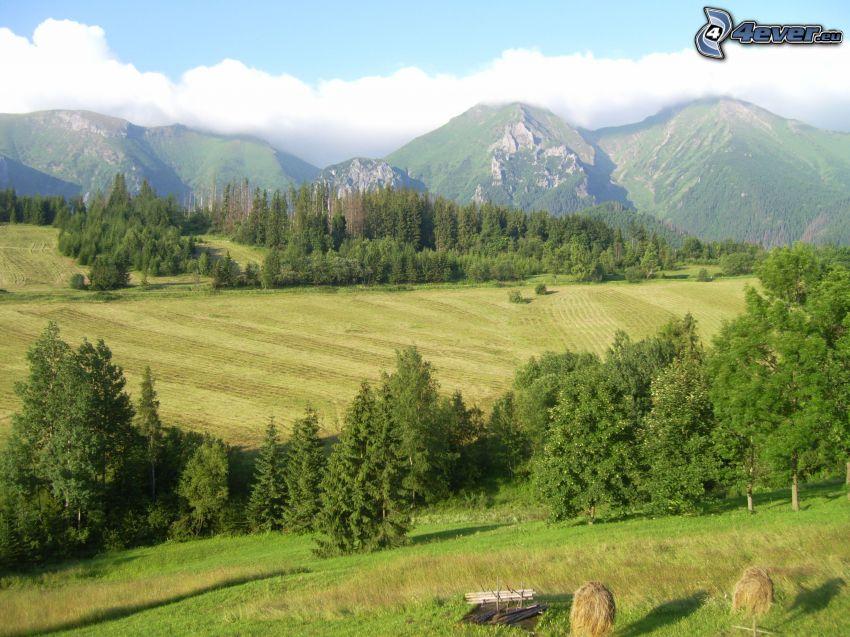 Tatry Bielskie, Wysokie Tatry, Słowacja, góry, drzewa, łąki, chmury