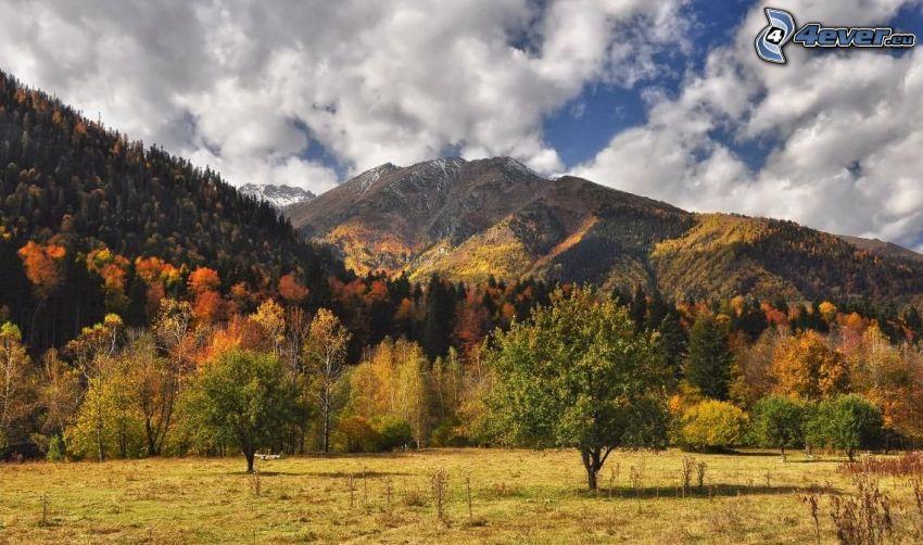 wzgórza, kolorowe jesienne drzewa