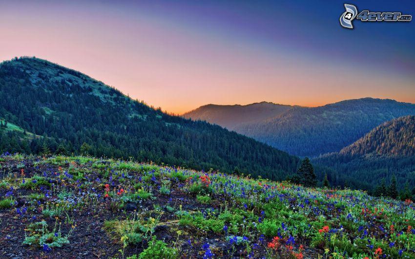wzgórza, kwiaty, wieczór