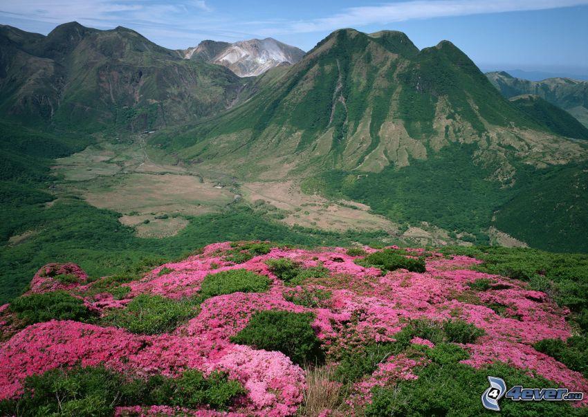 wzgórze, góra, łąka