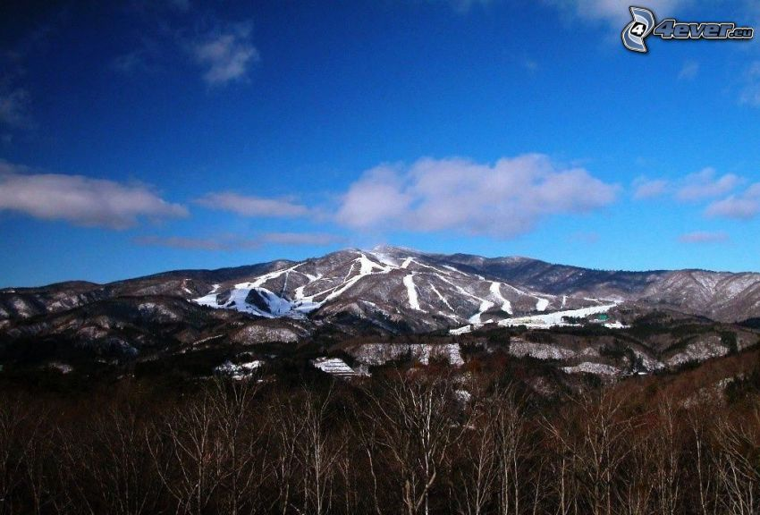zaśnieżona góra, brzozy