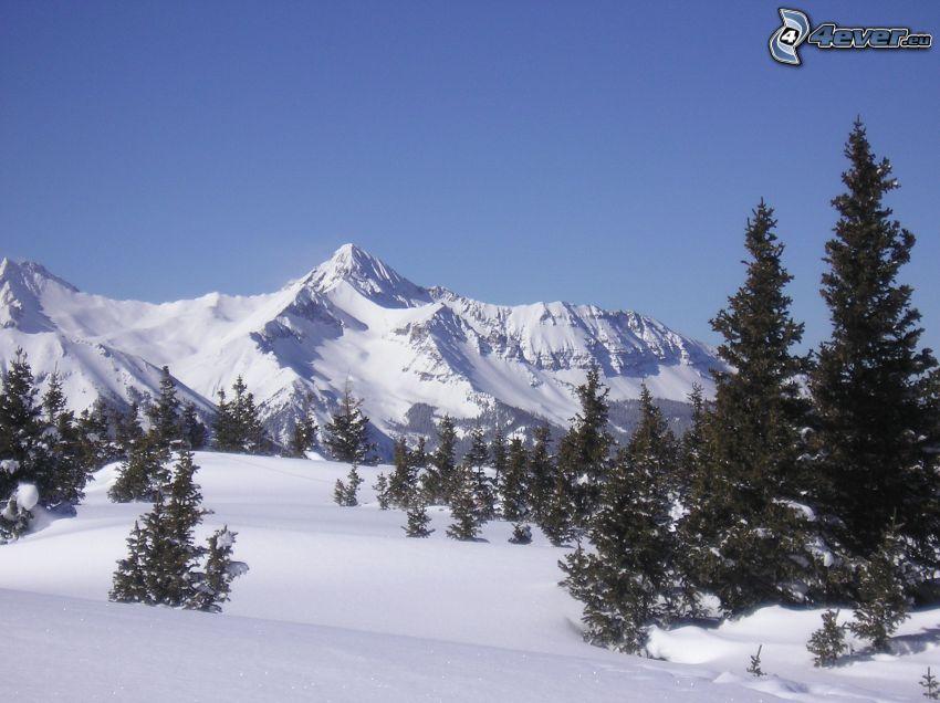 zaśnieżone góry, drzewa