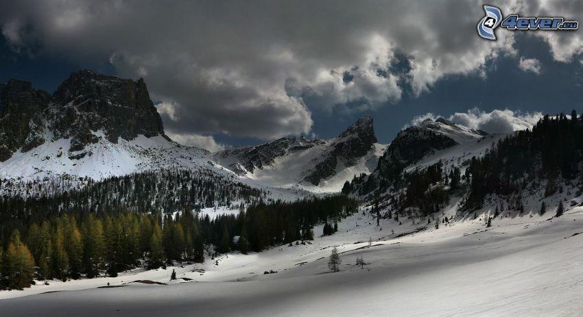 zaśnieżone góry, góry skaliste, las iglasty