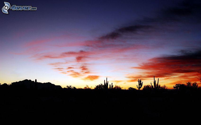 horyzont, kaktusy, niebo o zmroku