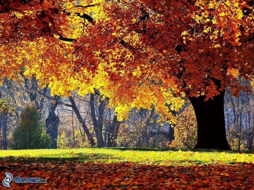 jesienne drzewo, opadnięte liście