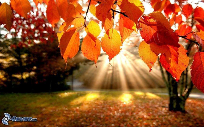 jesienne liście, promienie słoneczne