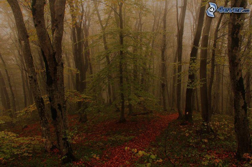 jesienny las, drzewa, mgła