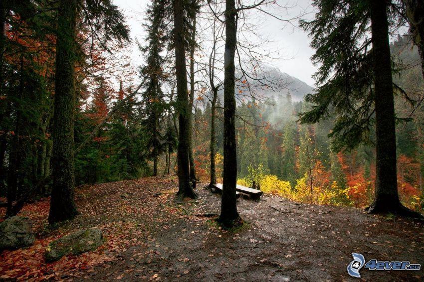 jesienny las, ławki