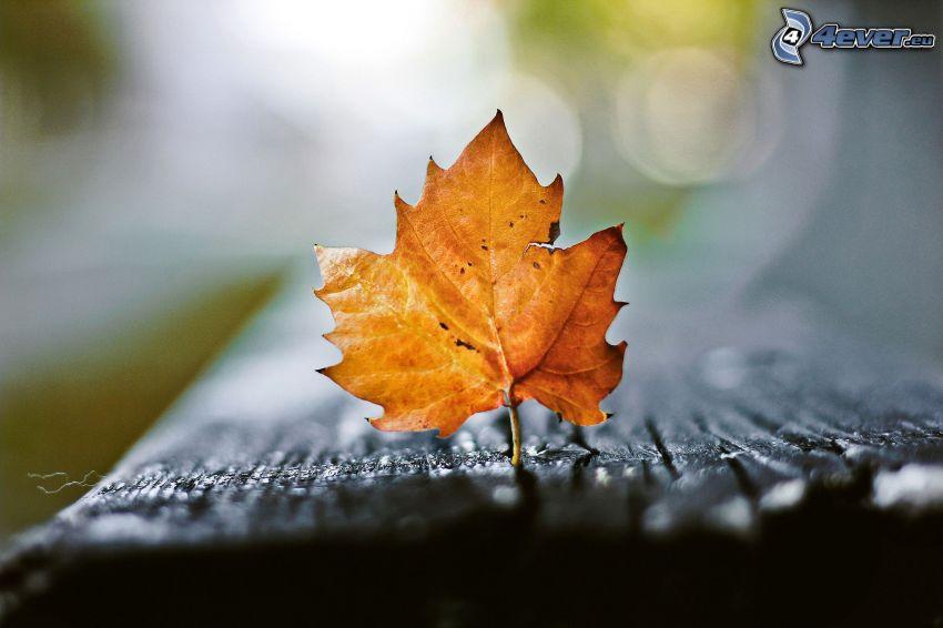jesienny liść, drewno