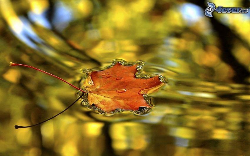jesienny liść, powierzchnia wody