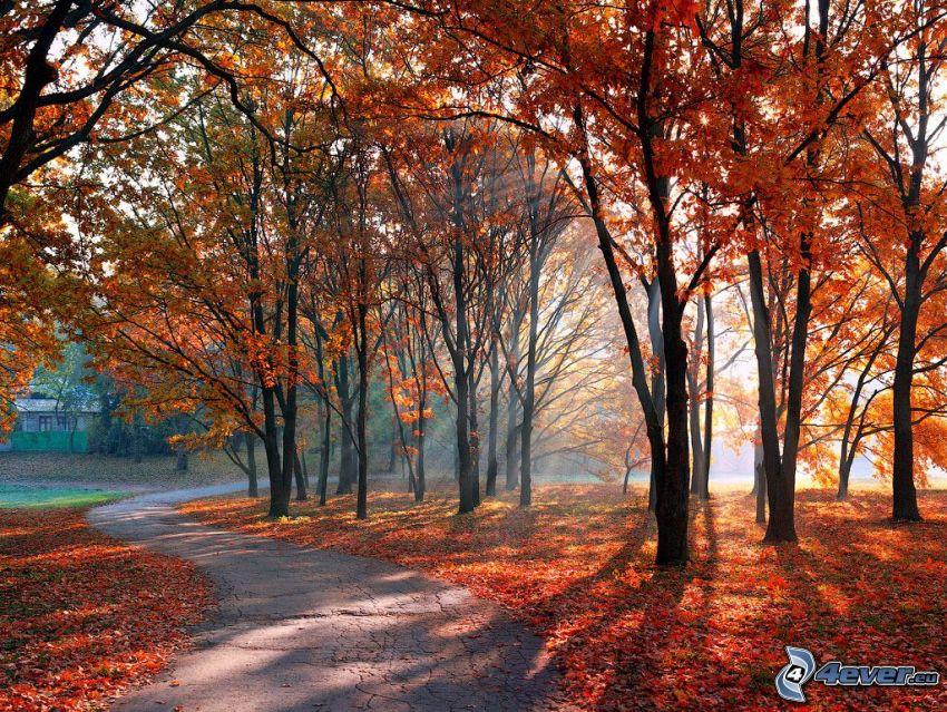 jesienny park, chodnik, kolorowe drzewa