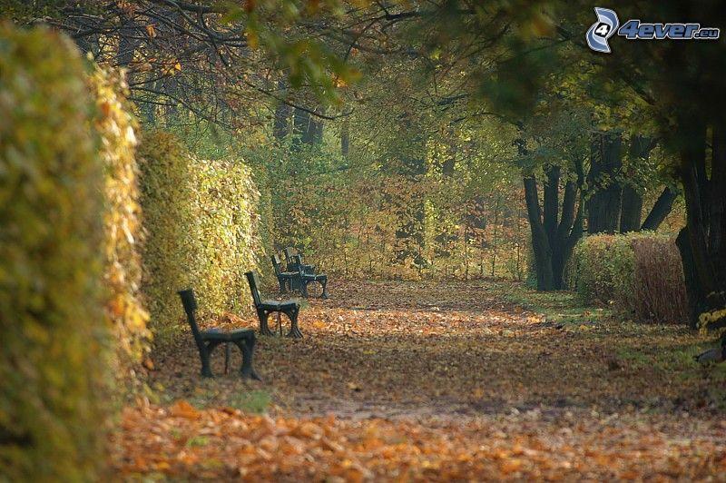 jesienny park, ławki