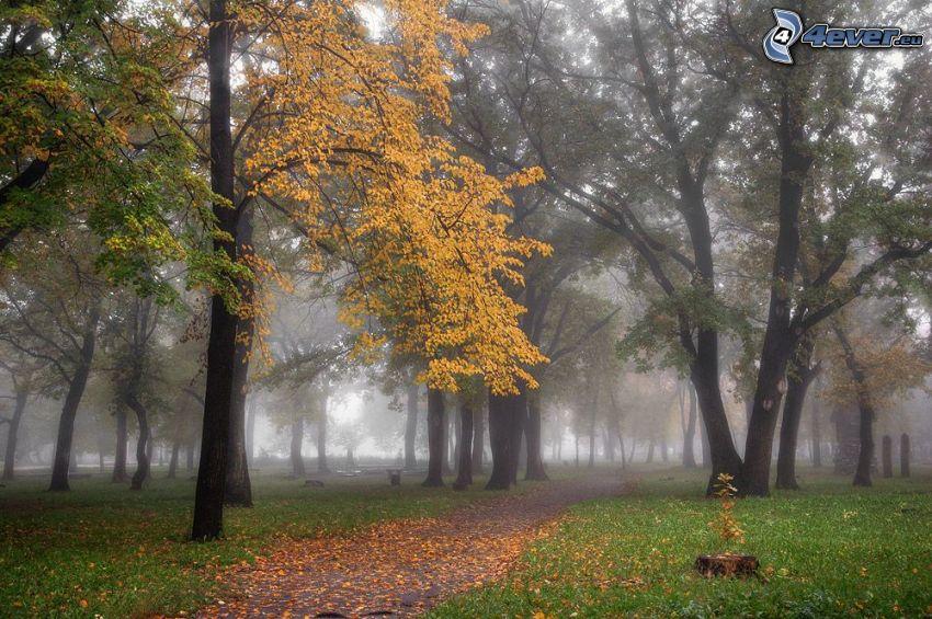 jesienny park, żółte drzewo, mgła