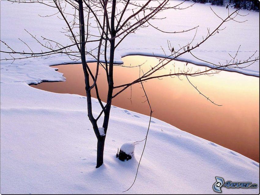 jeziorko, drzewo, śnieg