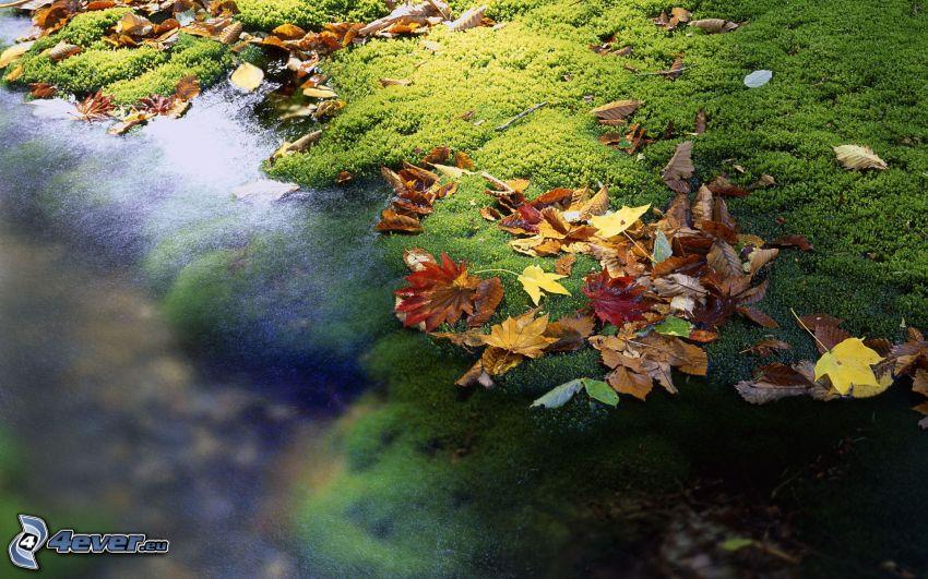 jeziorko, mech, opadnięte liście