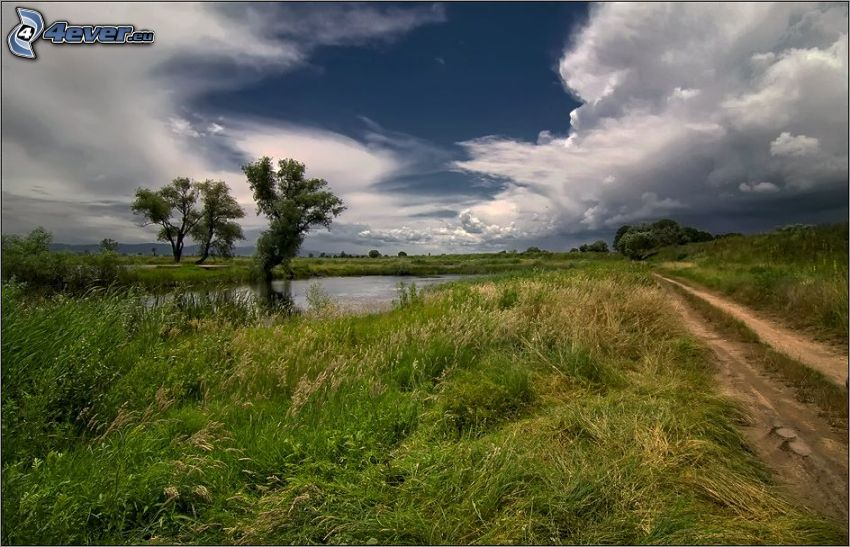 jeziorko, trawa, polna droga, drzewa, chmury
