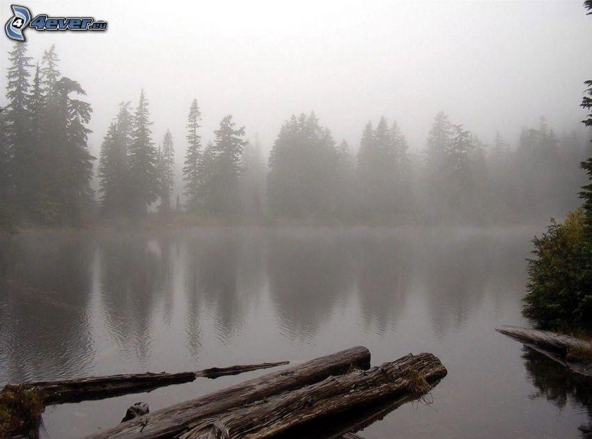 jezioro, drewno, przyziemna mgła