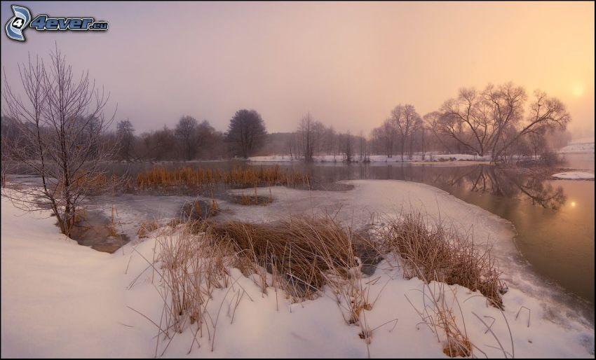 jezioro, sucha trawa, śnieg, słabe słońce
