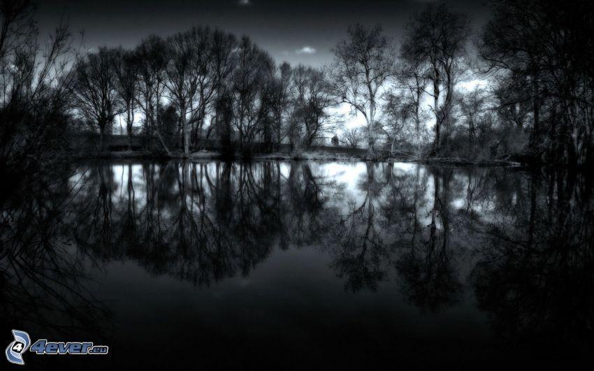 jezioro w lesie, ciemność