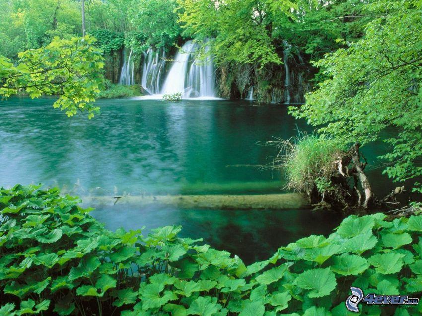 jezioro w lesie, wodospady, zieleń, drzewa
