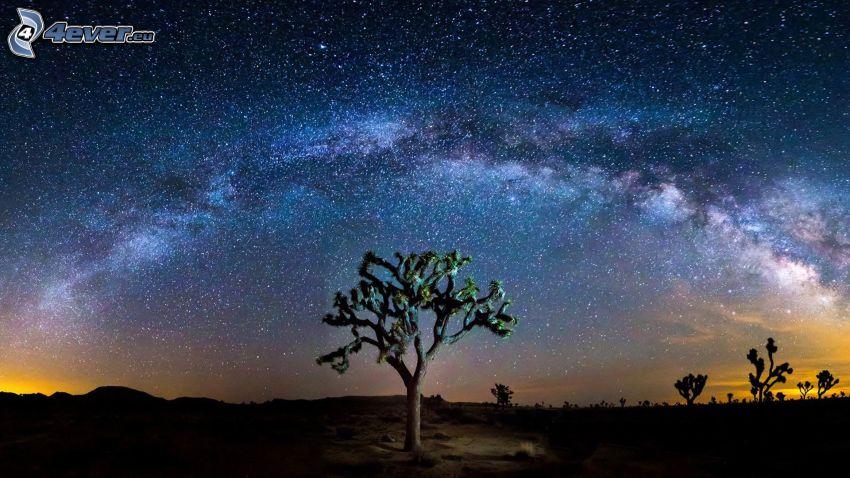 Joshua Tree National Park, drzewa, niebo w nocy, gwiaździste niebo