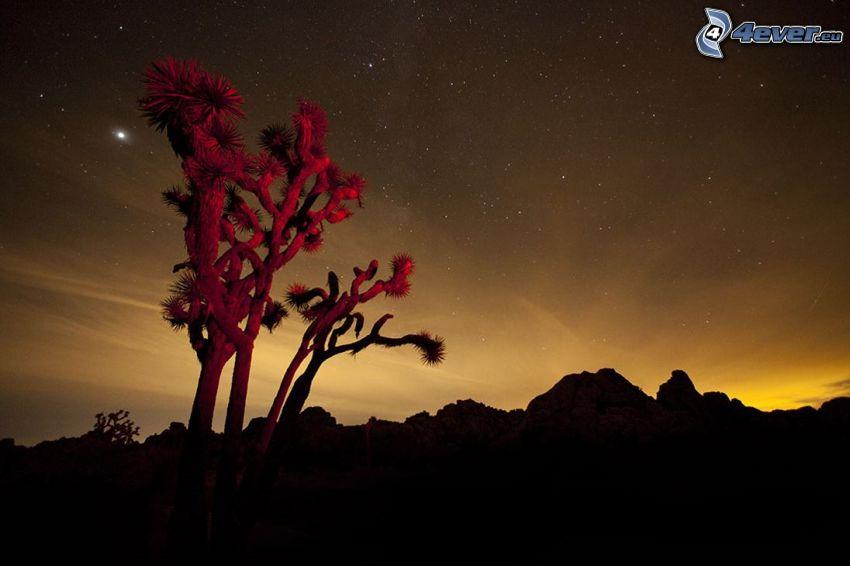 Joshua Tree National Park, drzewo, pasmo górskie, po zachodzie słońca, niebo w nocy