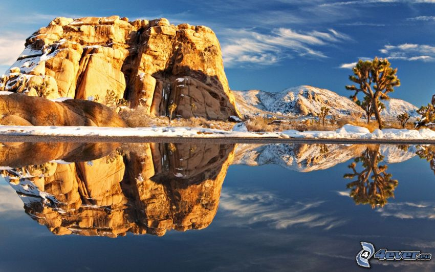 Joshua Tree National Park, jezioro, odbicie, skała, drzewo