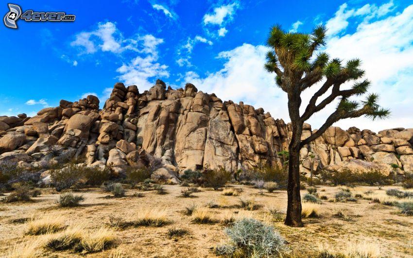 Joshua Tree National Park, skały, drzewo