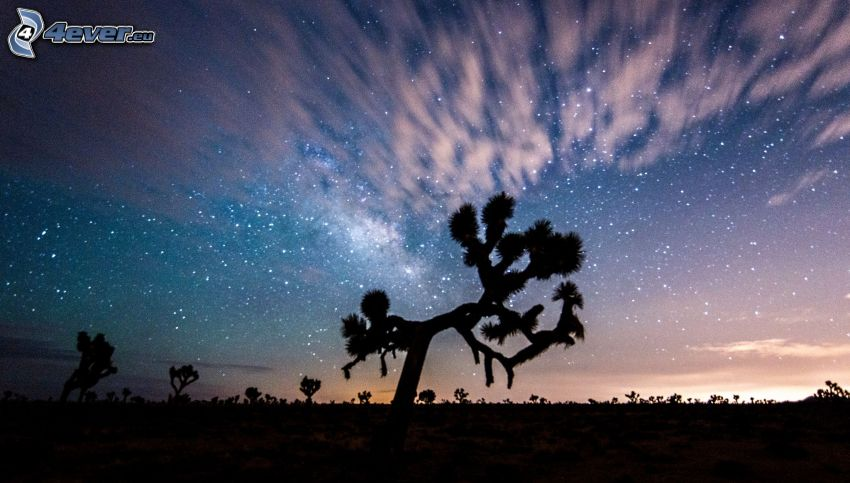 Joshua Tree National Park, sylwetki drzew, niebo w nocy