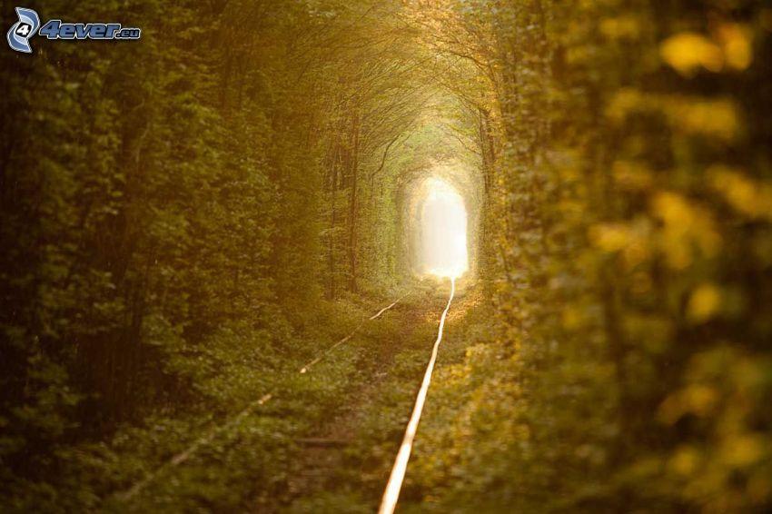 kolej żelazna, zielony tunel, światło