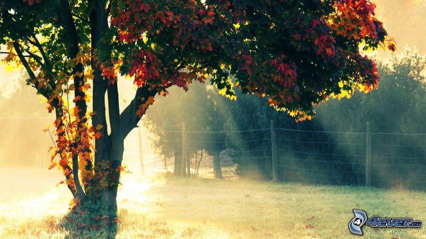 kolorowe drzewa, płot, promienie słoneczne