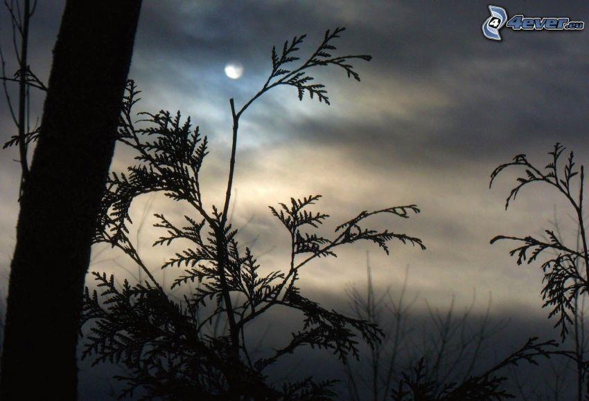 konary, księżyc