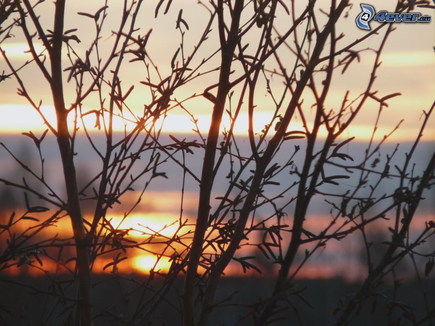 konary, zachód słońca za drzewem