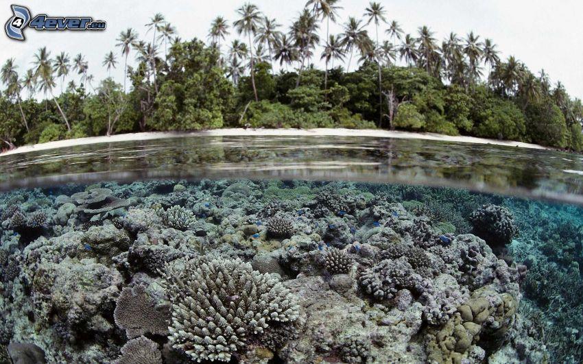 koralowce, palmy