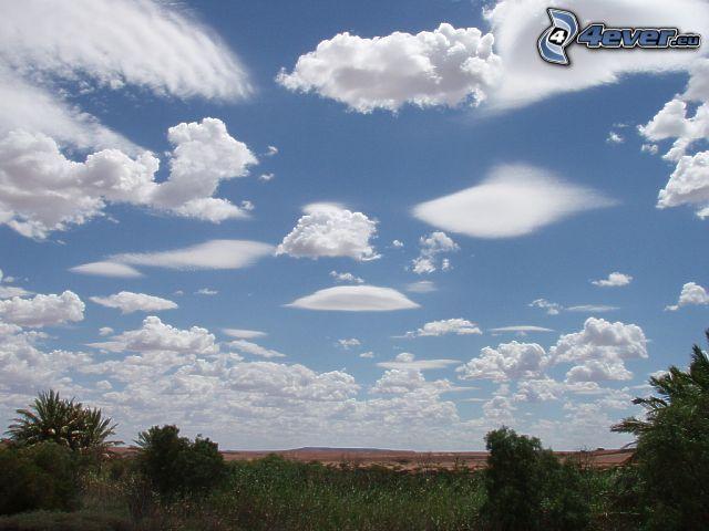 chmury, niebo, drzewa, krajobraz