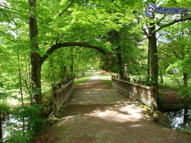 drewniany most, leśna droga, zielone drzewa, park