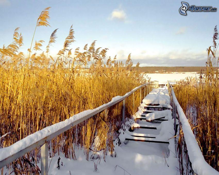 drewniany most, śnieg, zima, wysoka trawa
