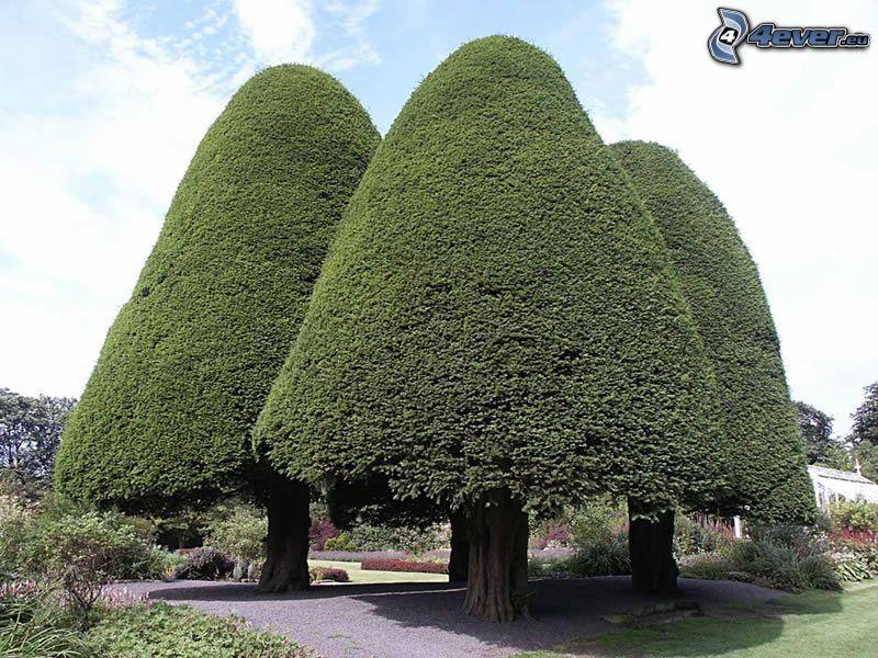 Drzewa w parku, ogród