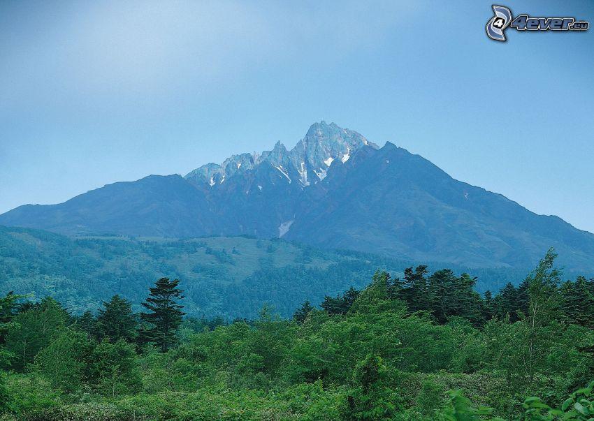 góra skalista, drzewa, las