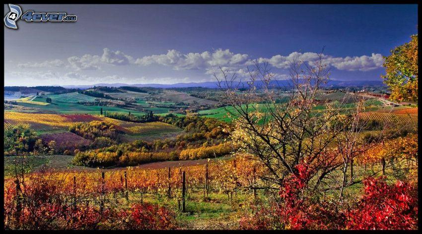 jesienne wzgórza, jesienny krajobraz, winnica, kolorowe liście