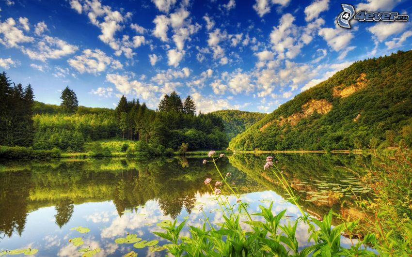 jezioro w lesie, odbicie, lilie wodne, chmury, HDR