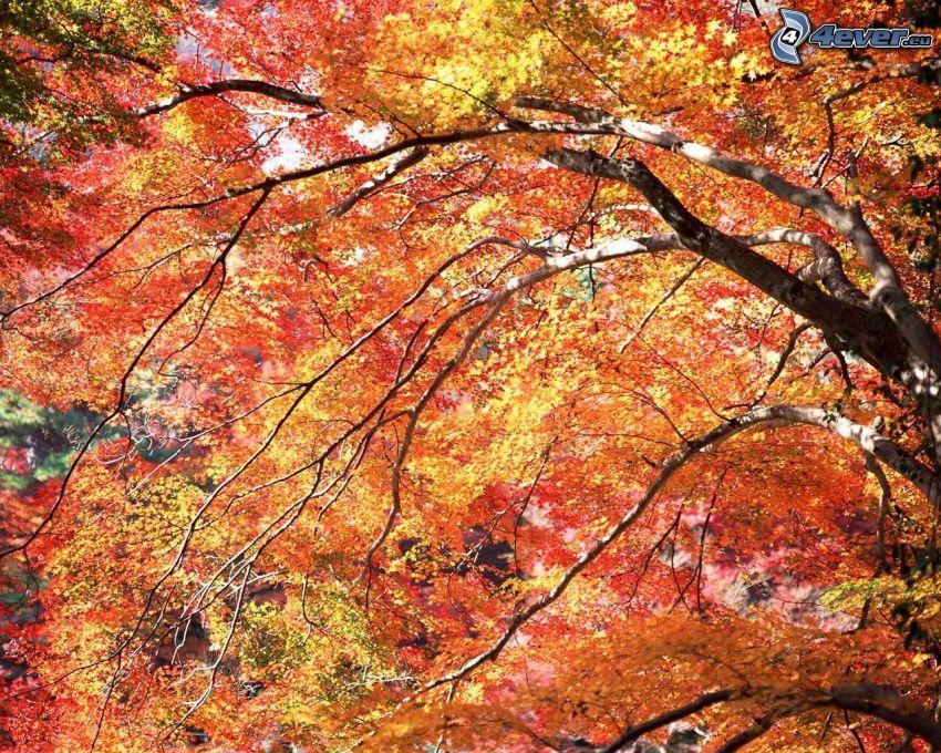 kolorowe drzewa, żółte liście, konary, jesień