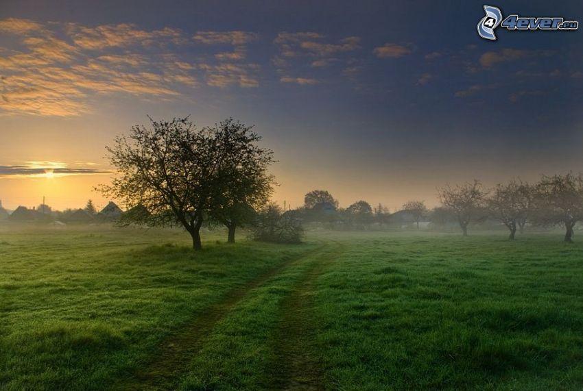 mglisty poranek, polna droga, drzewa liściaste, łąka, pole, wioska