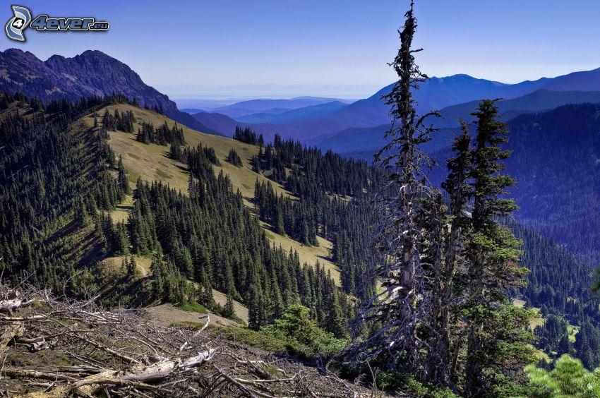 pasmo górskie, las, wyschnięte drzewa