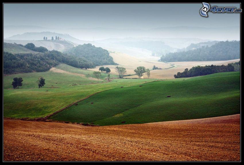 pole, wzgórza, drzewa