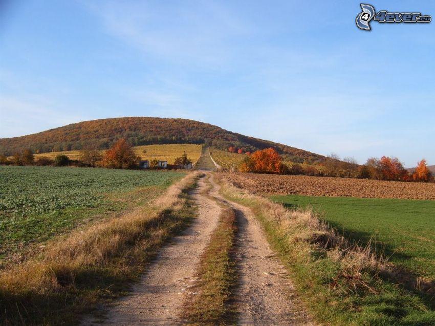 polna droga, łąka, wzgórze, przyroda