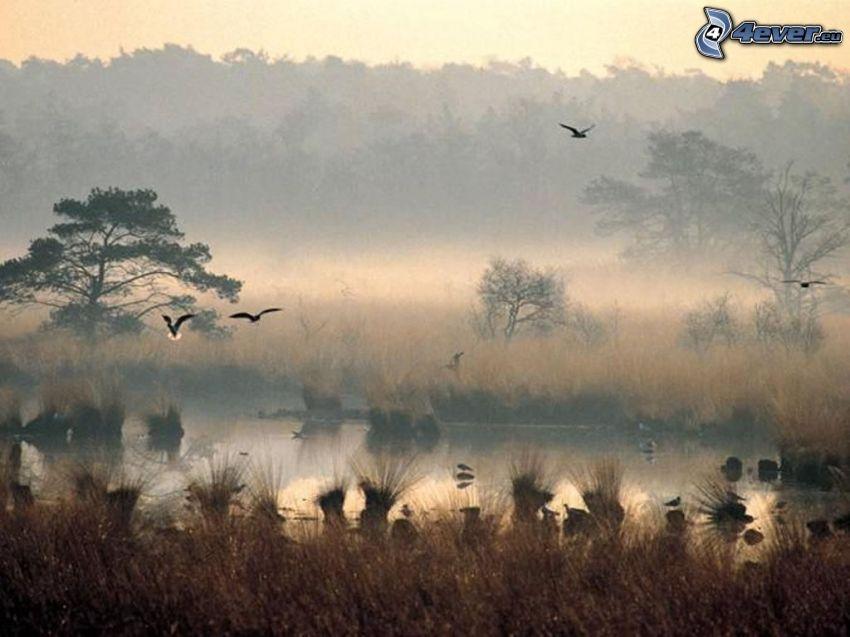 ptaki, step, woda, przyziemna mgła