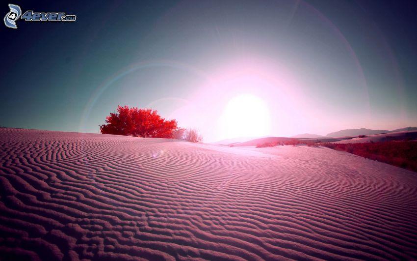 pustynia, samotne drzewo, zachód słońca