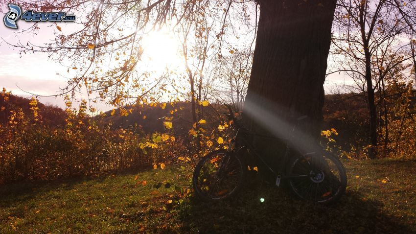 rower, promienie słoneczne, drzewo, krzewy